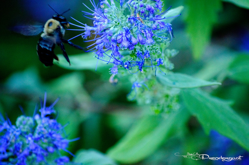 Large Bee with Flower