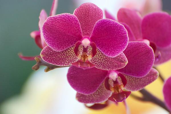 03-03-11 Orchids
