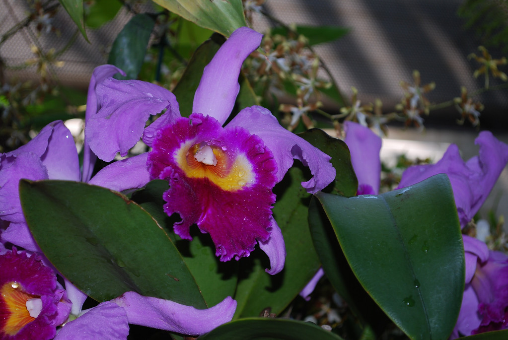 Join me for a stroll through the orchid room at the Botanic Garden in Washington, DC...!