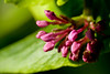 110426_Flowers-1451037