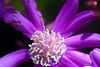 110426_Flowers-1450982