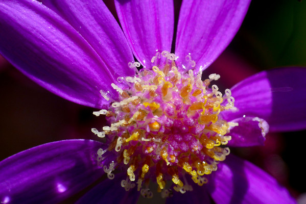 110426_Flowers