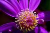 110426_Flowers-1450977
