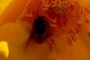 110426_Flowers-1451115