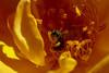 110426_Flowers-1451085