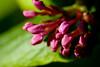 110426_Flowers-1451028
