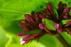 110426_Flowers-1451049