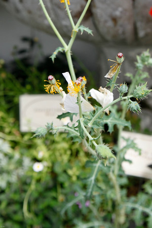 110503_Wicked_Plants