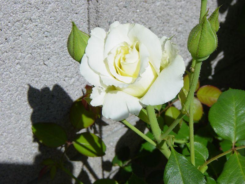 2004-03-24_104103