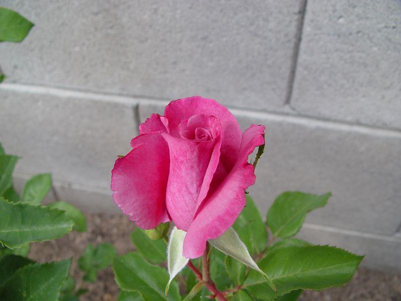 2004-04-11_164046