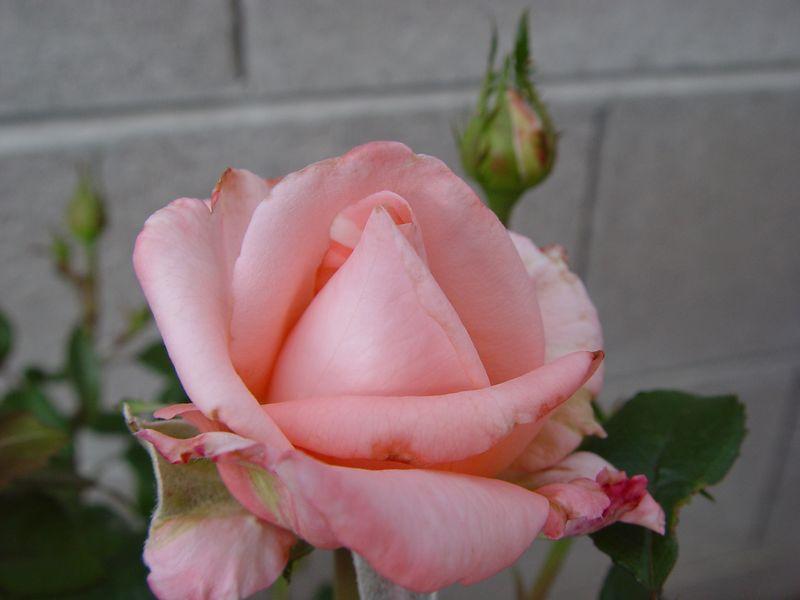 2004-04-11_165158