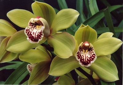 29Sep2004-3_Orchids