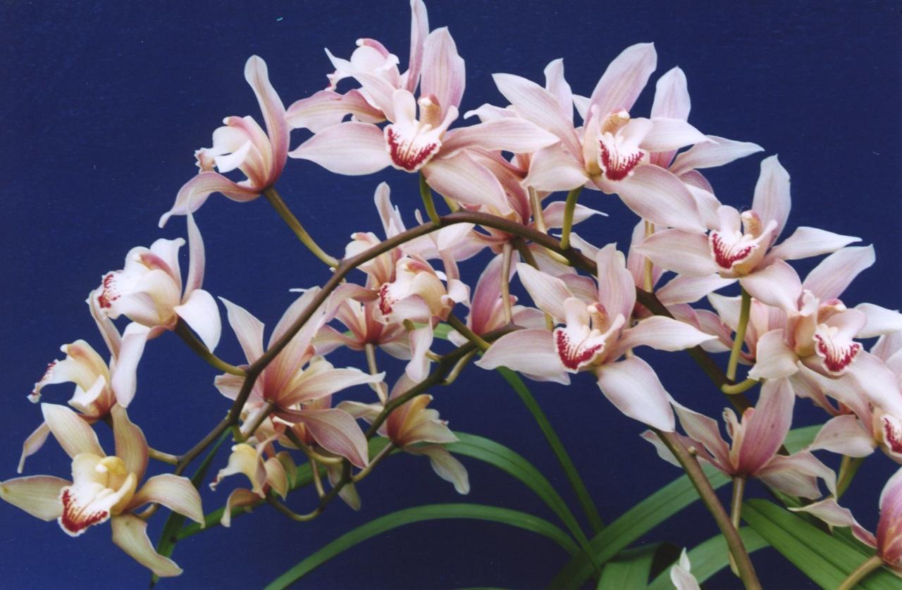03Nov2004-12_Orchids