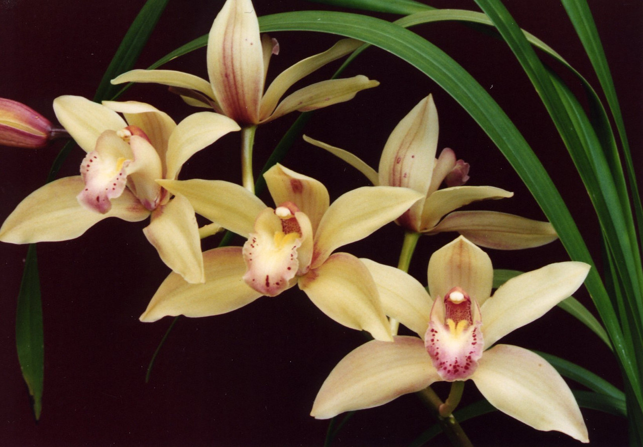 29Sep2004-12_Orchids