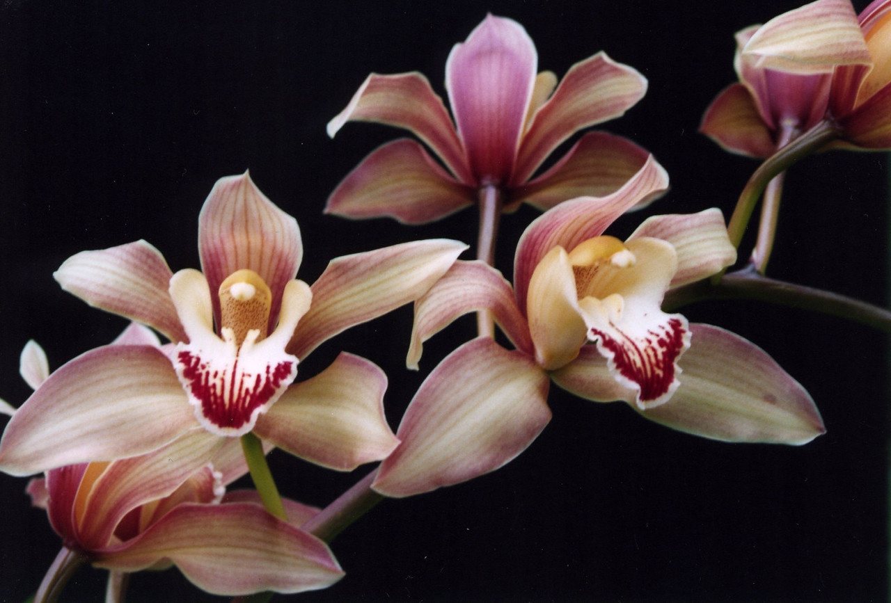 20Oct2004-6_Orchids