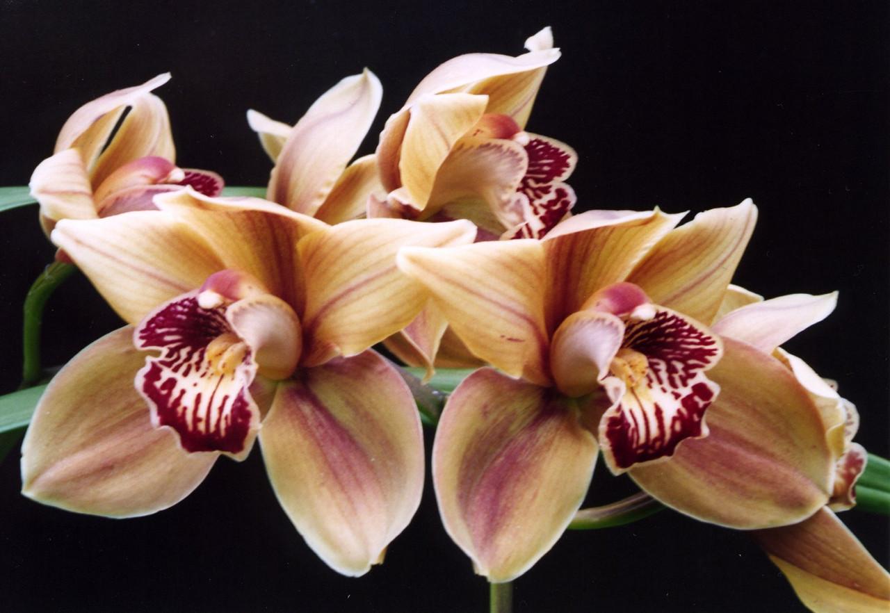 03Nov2004-14_Orchids