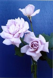 03Dec2004_15_Roses