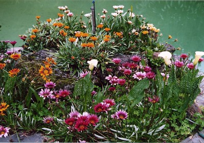Gazanias in a pool-side rockery. A few lilies, as well.