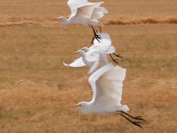 Art and Pat's pet birds
