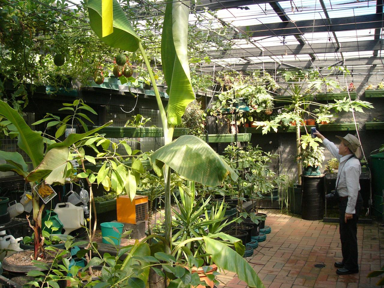 20070309_2553_Hydroponic garden at Gardenworld, Springvale Road