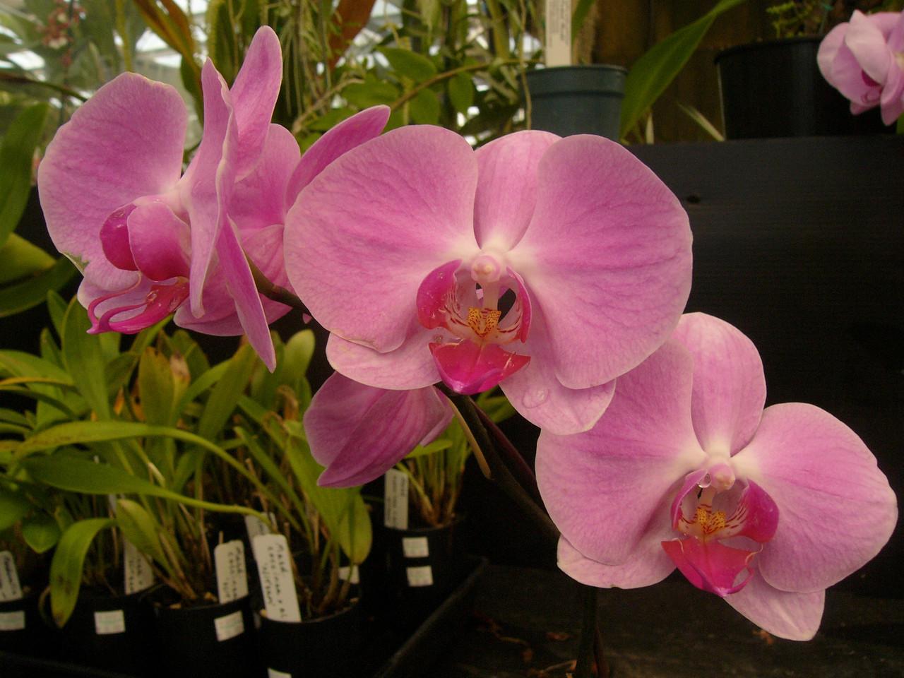 20070309_2597 Orchids