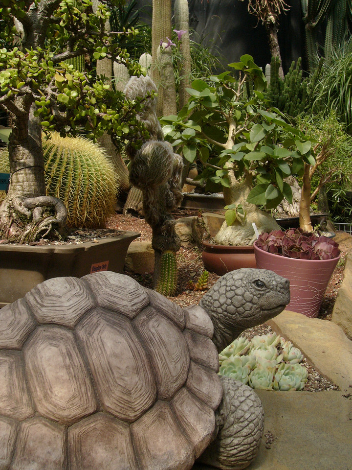 20070309_2604 Tortoise in the succulent garden