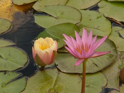 20070312_2622 Lilies