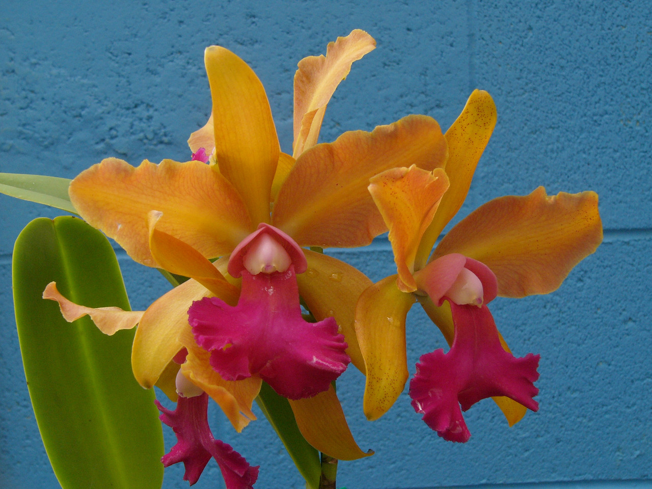 20070309_2582 Orchids