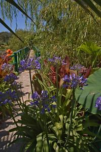 20080103_1306 Canna at Blue Lotus Garden