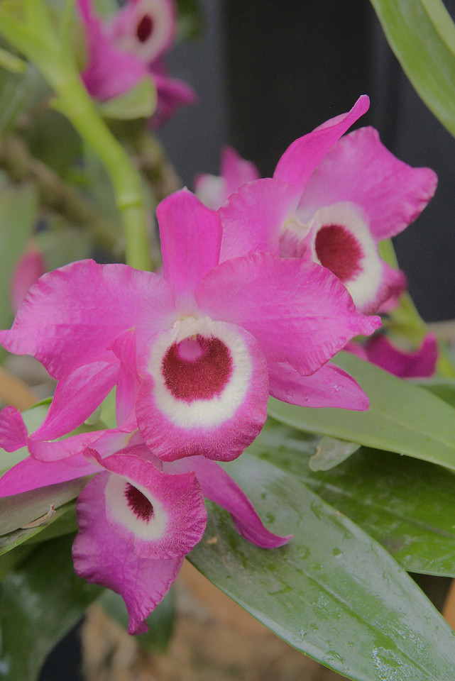 20071025_0959 Orchids