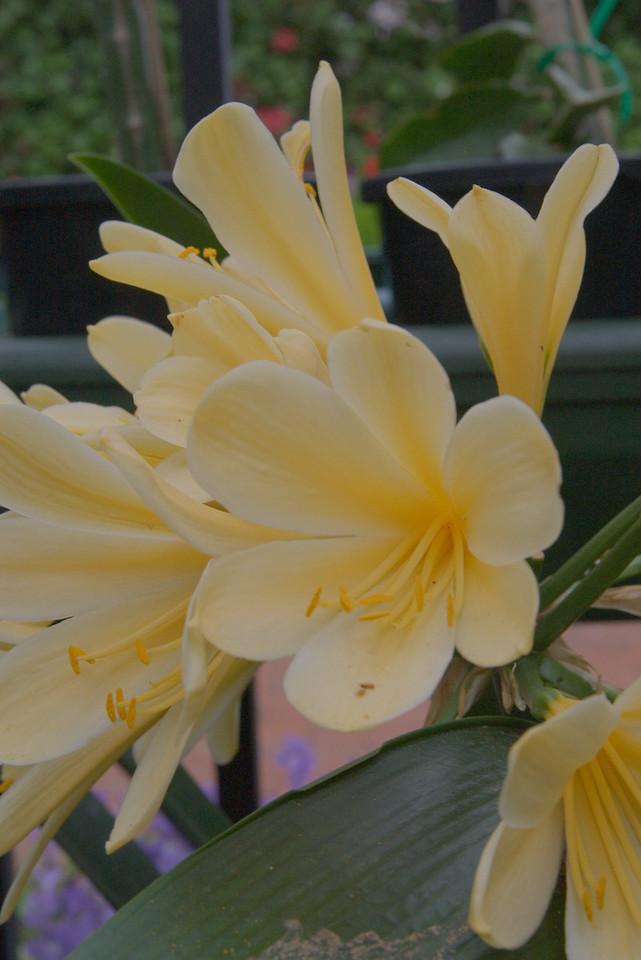20071025_0969 Garden World