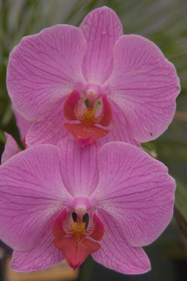 20071025_1015 Orchids, Garden World