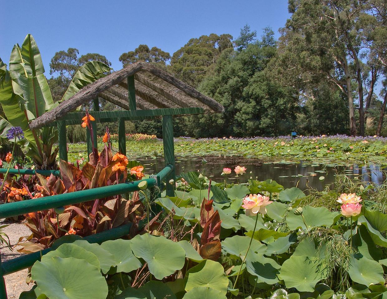 20080103_1320 Blue Lotus Water Garden