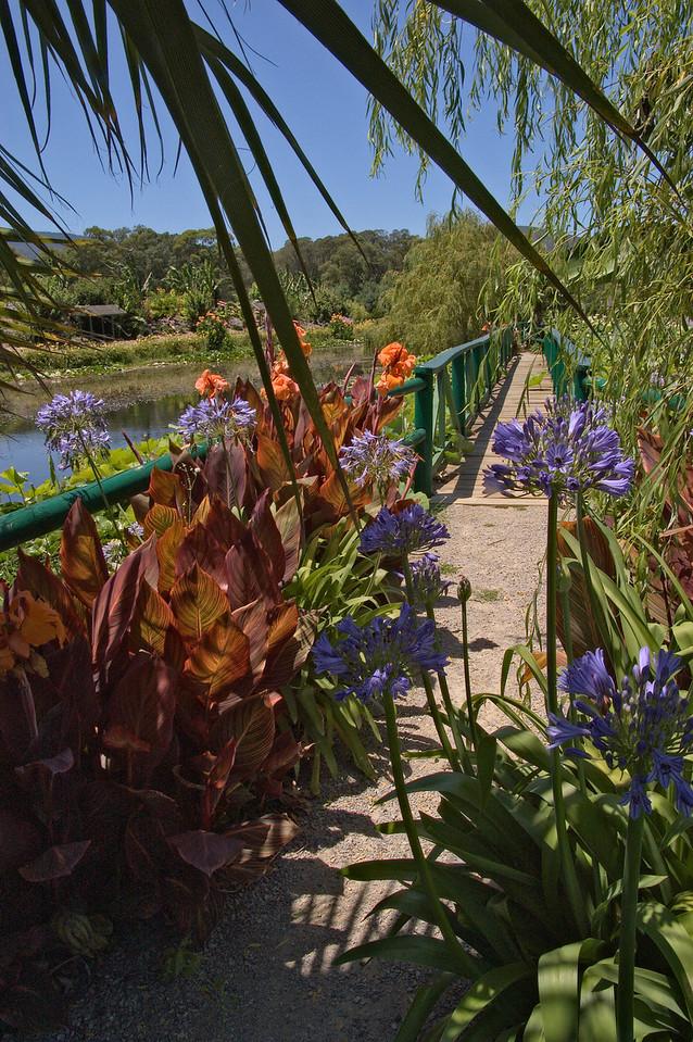 20080103_1305 Blue Lotus Water Garden