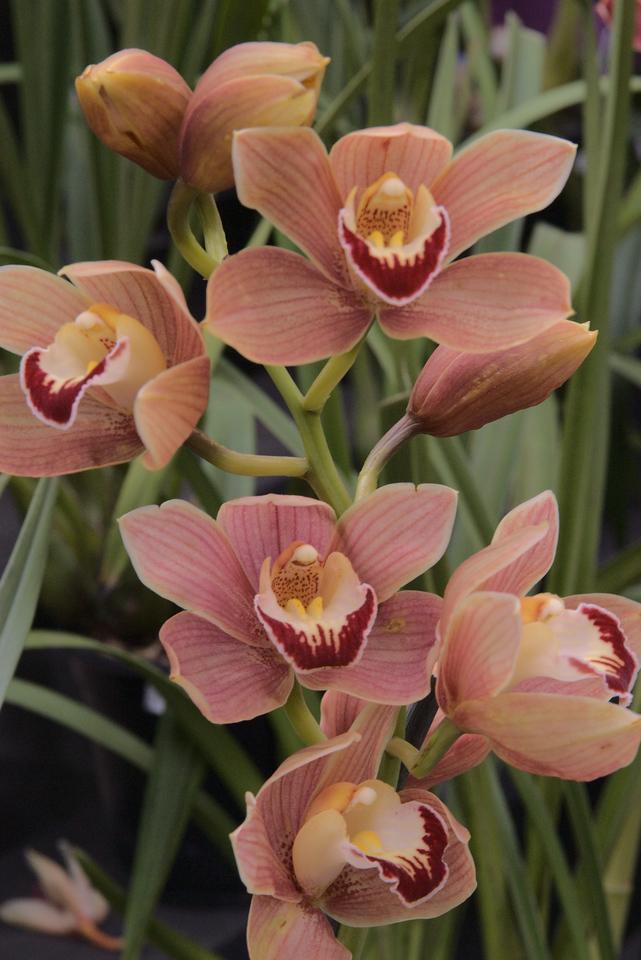 20071025_0995 Orchids, Garden World