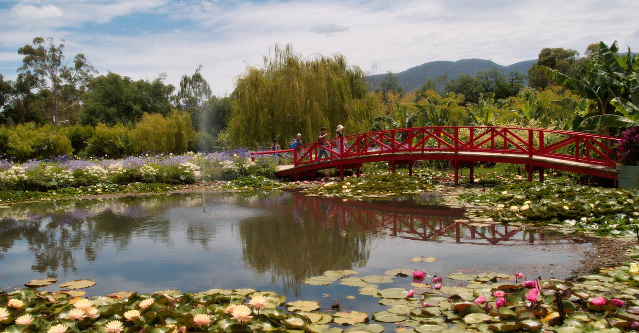 20090110_2478 Blue Lotus Water Gardens