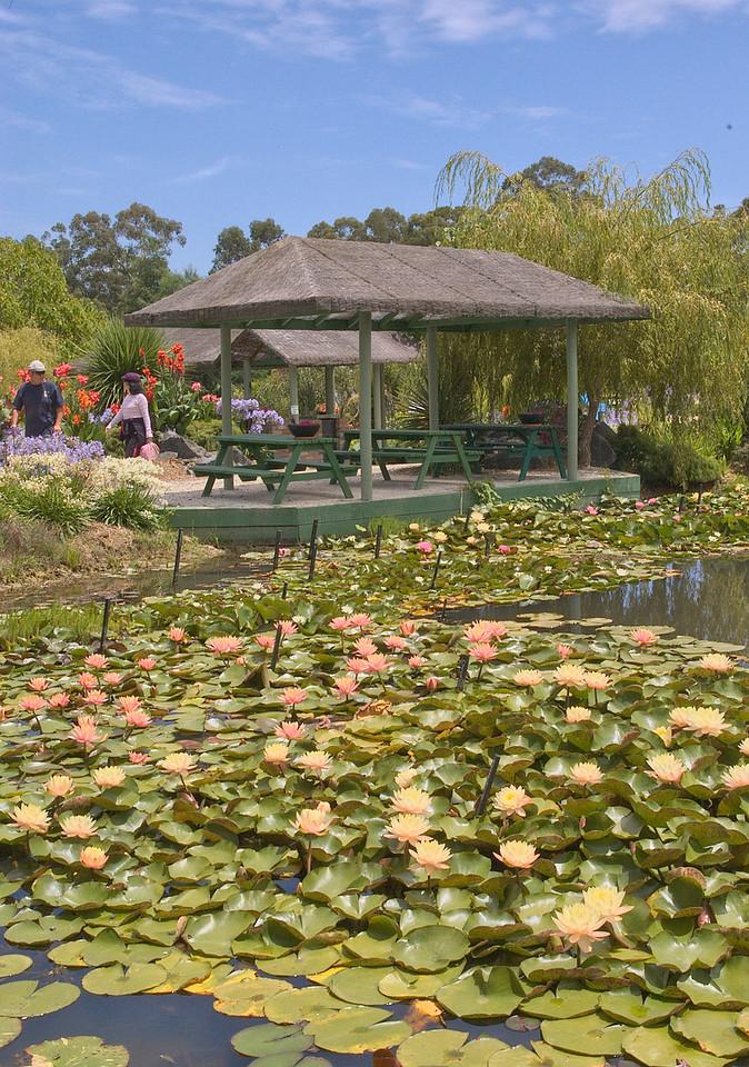 20090110_2481 Blue Lotus Water Garden