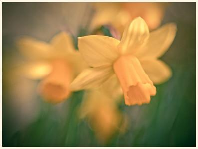 2009 Flowers & Bots