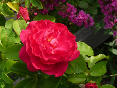 2009-Summer-Local-Flowers