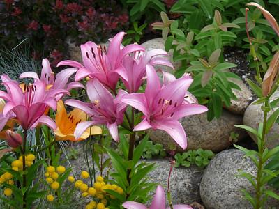 2009-Summer-Seattle-Flowers
