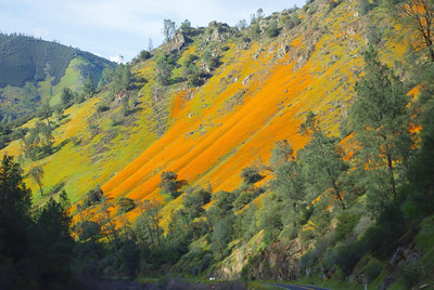 Merced River Canyon Wildflowers Spring 2009