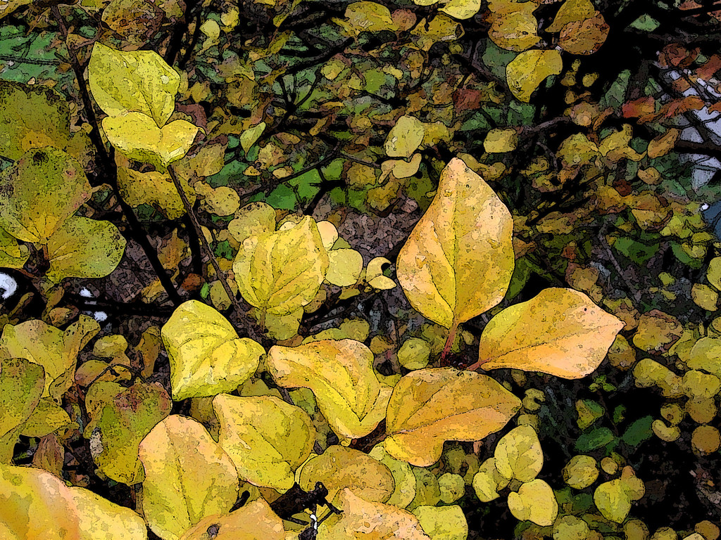 Autumn leaves of the spirea.