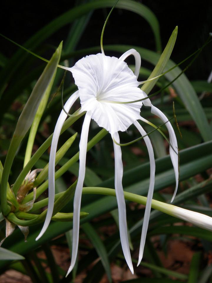 20100214_1341_0523 Mt Cootha Botanical Gardens, Brisbane