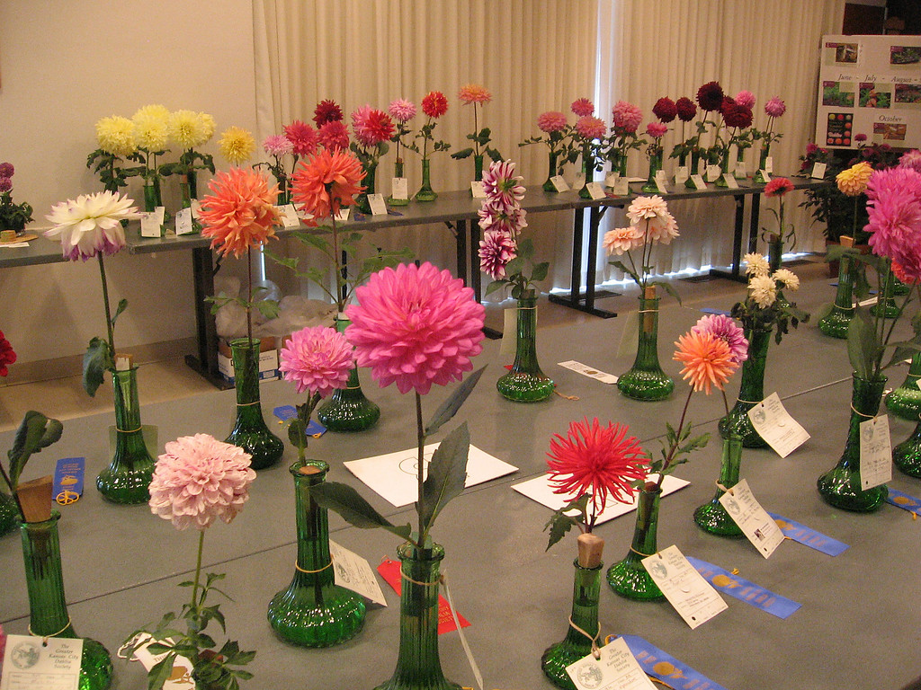 The display room for the dahlias.<br /> This wasn't a good growing season for the flowers and there were fewer than there would have been in a better year.
