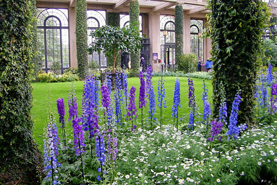 2010 Longwood Gardens Orchids