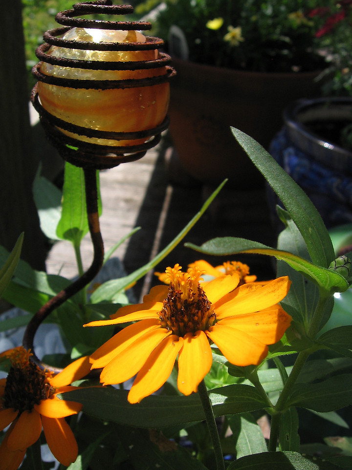 Bright yellow zinnias with a large marble encased in a rusty iron cage.