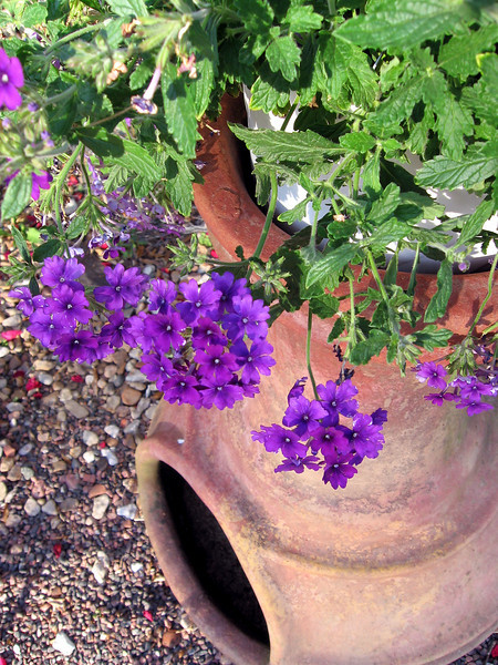Blue Verbena on the chiminea.<br /> The chiminea has been a flower pot holder for a number of years now and it works quite well as that.