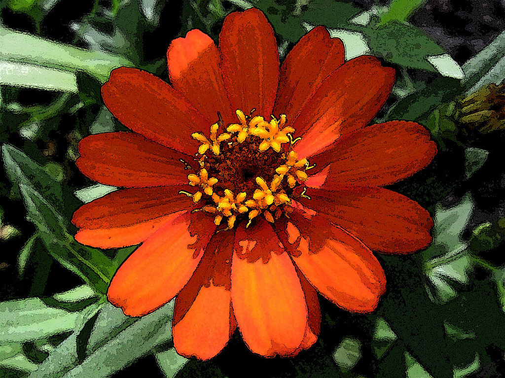 Orange zinnia as a watercolor.