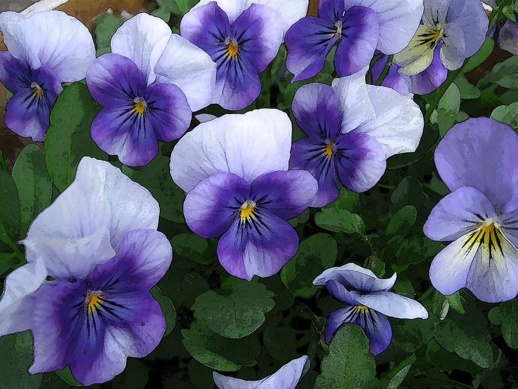 Blue violas with a watercolor filter applied.