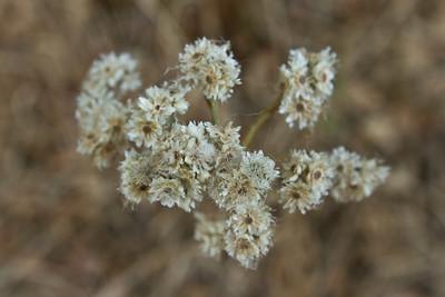 Flowers. Augustin Bernal Park - Pleasanton, CA, USA